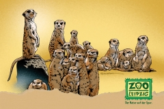 zoo-erdmaench-pk152x109.fh11